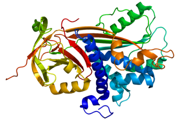 protein_serpinf1_pdb_1imv